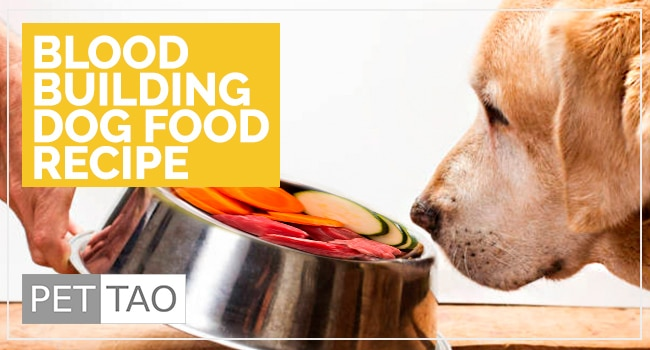 Image for  TCVM Blood Building Dog Food Recipe: Food Therapy Backed by Veterinarians