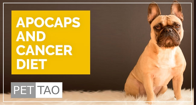 photo for: Apocaps and the Dog Cancer Diet