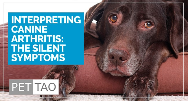 image for 3 Surefire Symptoms of Dog Arthritis