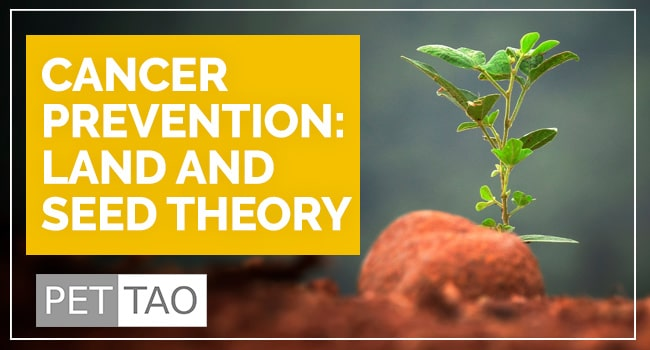 Image for Dog Cancer Prevention is the Best Treatment