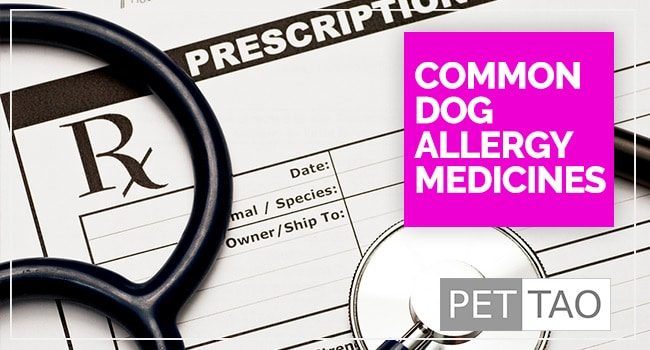 What are the Most Common Dog Allergy Medicines?