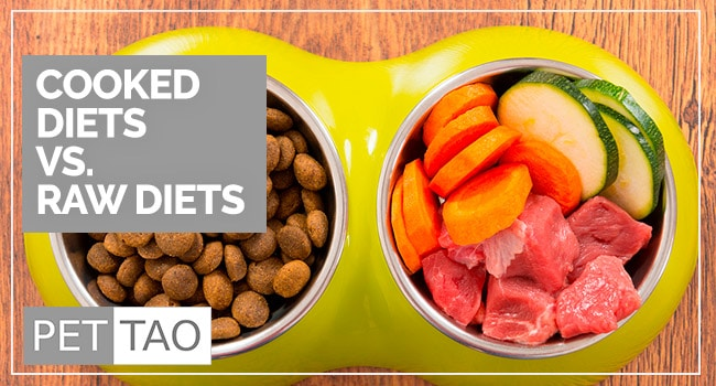 3 Reasons Cooked Pet Food Diets are Better Than Raw Pet Food Diets