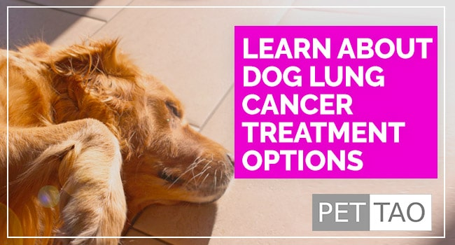 Treatment Options for Lung Cancer in Dogs