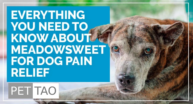 Image for Everything You Need to Know About Meadowsweet for Dog Pain Relief