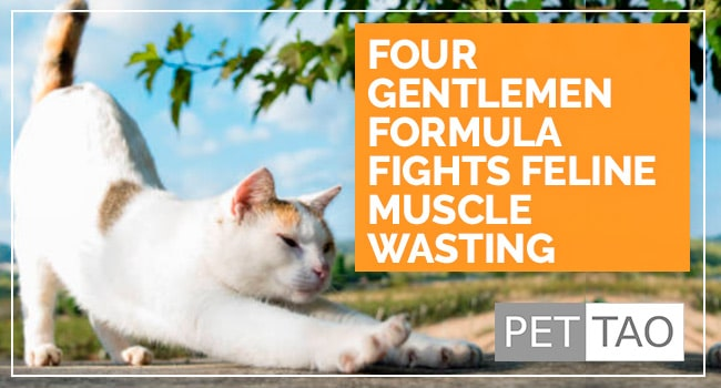 Four Gentlemen Formula Fights Feline Muscle Wasting