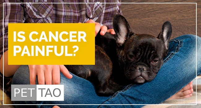 Image for What Every Pet Owner Should Know About Dog Cancer