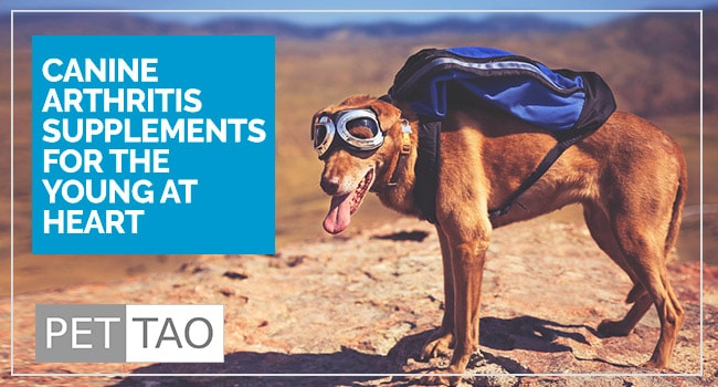 Image for Supplements for Dog Arthritis are Helping Aging Dogs with Pain