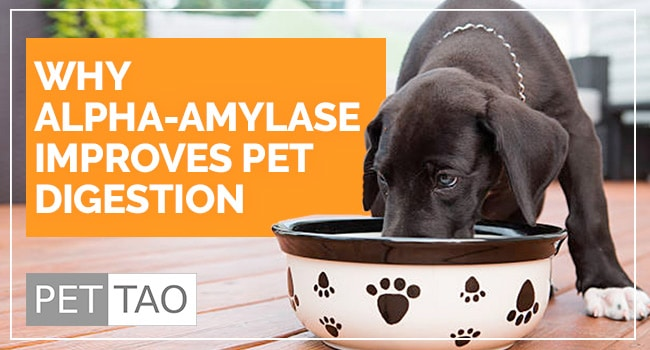 Why Alpha-Amylase Improves Pet Digestion