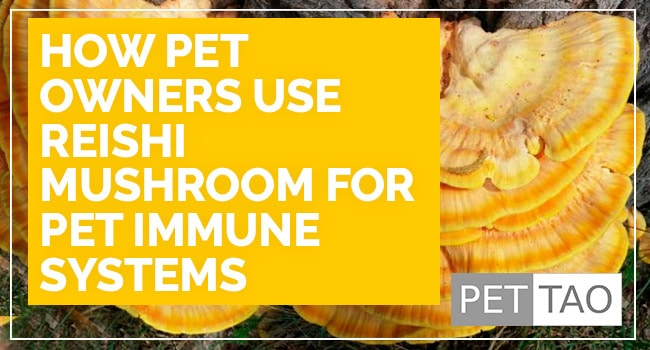 How Pet Owners Use Reishi Mushroom for Pet Immune Systems