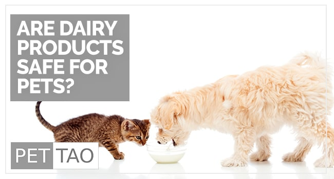 What Everybody Ought to Know about Milk for Dogs and Cats