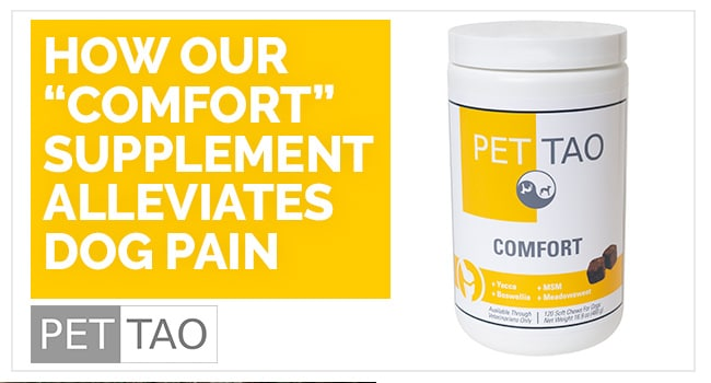 "Image for How our ""Comfort"" Supplement Alleviates Dog Pain"