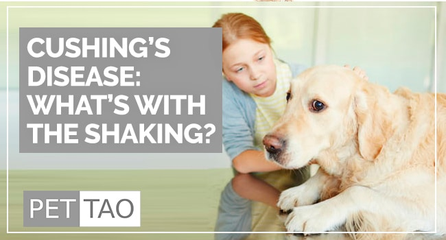Image for Why Is My Dog Shaking?