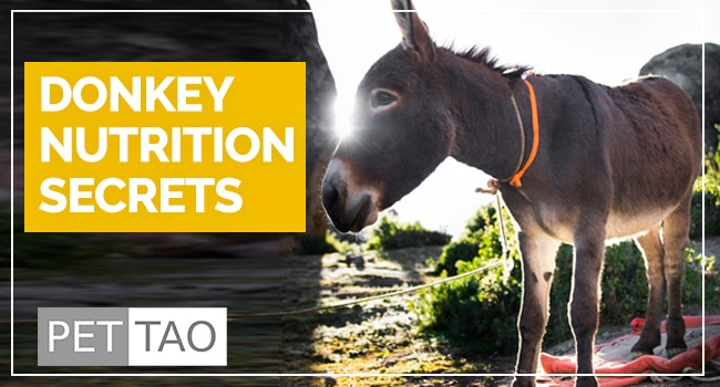Simple Secrets of Donkey Nutrition