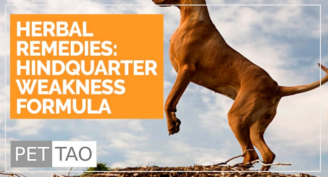 Hindquarter Weakness: Improve Dog Hind Leg Weakness Naturally