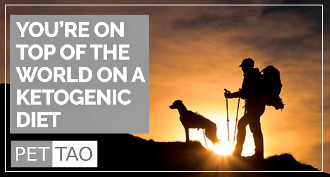 Image for The Benefits and Dangers of a Ketogenic Diet For Dogs