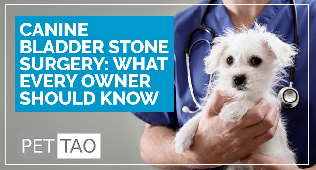 Image for What to Know About Surgery for Dog Bladder Stones